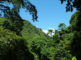Waimea Valley preserves the native plants and birds